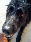 My Dog Rio